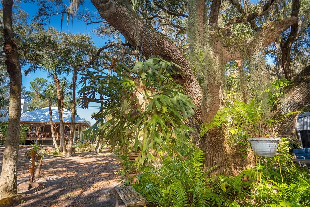 Nature at it's finest---stag horns, wild jasmine, bamboo & more - Single Family Home for sale at 1199 Seahorse Ln, Englewood, FL 34224 - MLS Number is D6110877