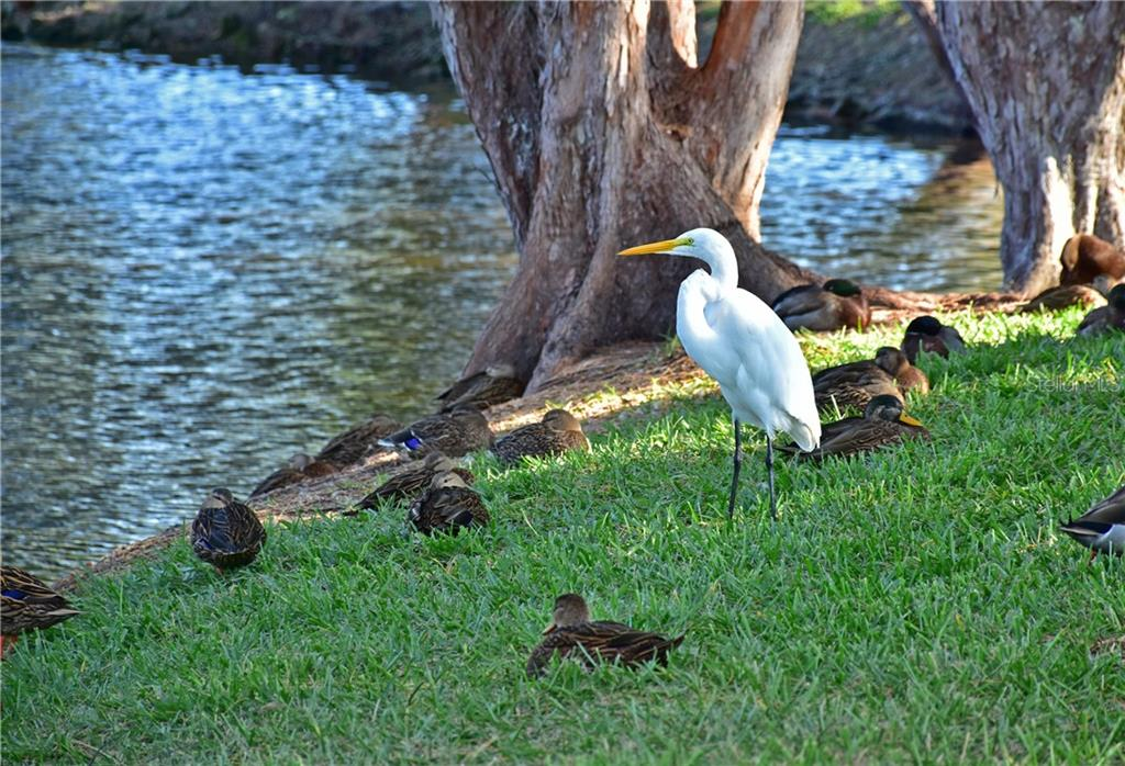 Mt Vernon is the favorite flocking place for hundreds of White Pelicans .. make it your favorite place too .. the Mt Vernon Life-Style knows no limits .. Mt Vernon on Sarasota Bay coastline .. just beautiful .. - Condo for sale at 4706 Independence Dr, Bradenton, FL 34210 - MLS Number is A4443759